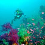 Cosa fare a Zoagli - immersioni subacquee