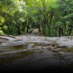 Cosa fare a Zoagli - Escursioni nel verde